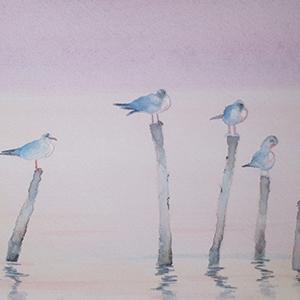 Les Oiseaux de Plisson_Aquarelle